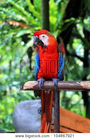 Parrot Standing On Wooden Pole