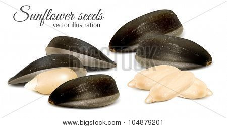 Sunflower seeds. Vector illustration.