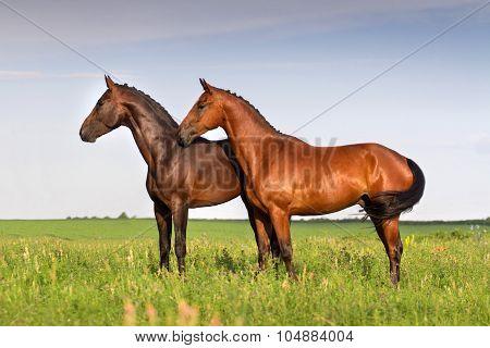 Couple horses