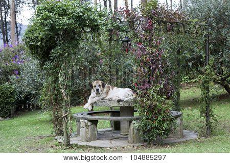 Lying Mastiff Arbor