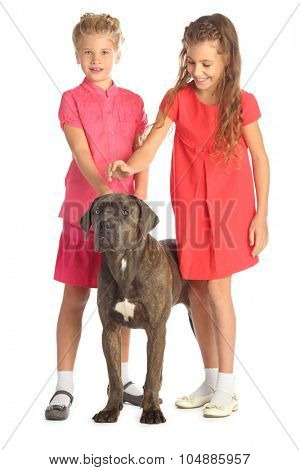 Two beautiful girls joyfully stroking a big dogs head isolated on white. Focus on the dog