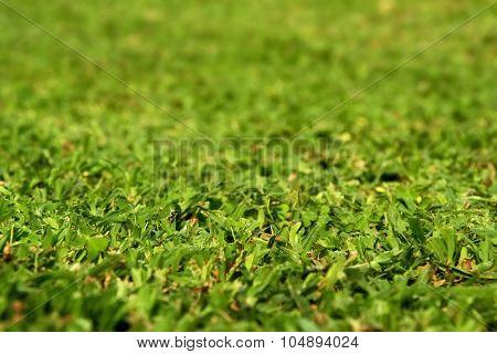 Freshly Cut Green Gress Field
