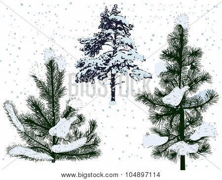 illustration with pines in snow isolated on white background