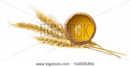 Fresh Egg Yolk Wheat Ear Isolated On White Background