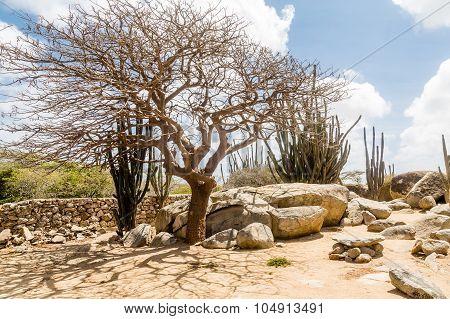 Windblown Tree Among Cactus