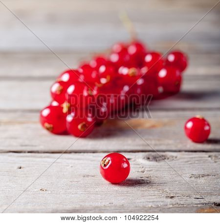 Redcurrant branch  on a wooden background