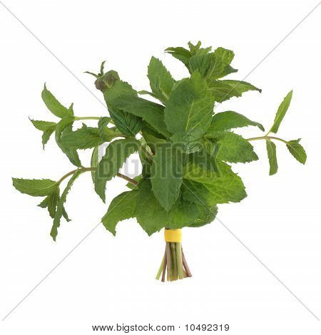 Lemon Balm Herb Posy