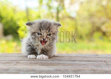 Small Kitten On Table Outdoors