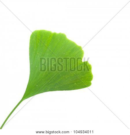 Ginkgo leaf. All on white background