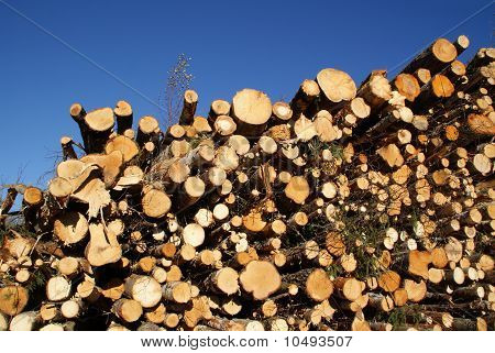 Stacked Wood Logs For Renewable Energy