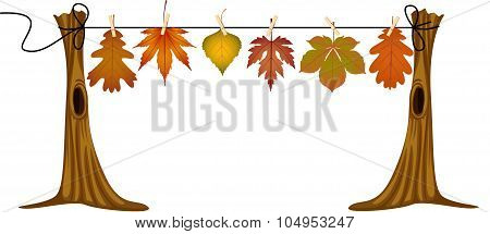 Autumn leaves hanging to dry