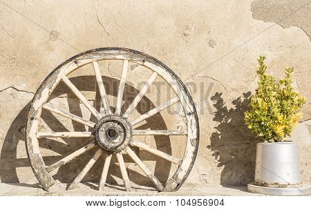wheel of an old chariot and a green plant used for decoration