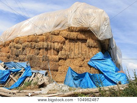 Stacks of straw for feeding livestock