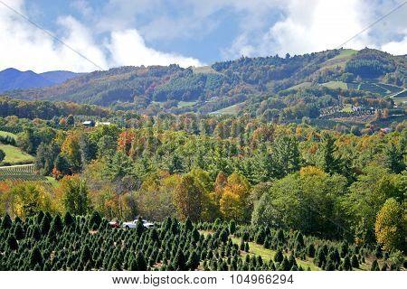 Autumn Leaves in Appalachia