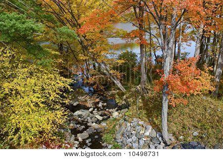 Autumn Shades