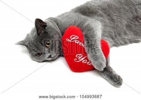 Cat And Red Pillow On A White Background