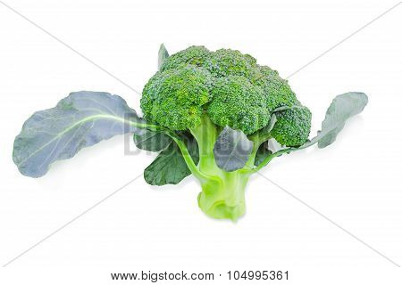 Head Of Broccoli On A Light Background