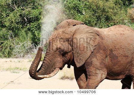 Elefante bañándose
