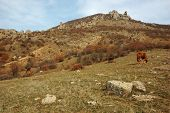 Demirji Mountain And Ghost Valley,crimea,ukraine - Famous Landmark And Natural Reserve poster