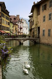 picture of annecy  - Swans in canal in Annecy in France - JPG