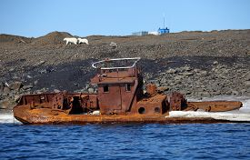 image of polluted  - Polar bear survival in Arctic  - JPG