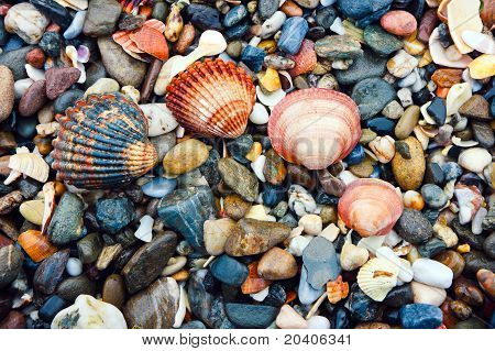 Arc Of Shells