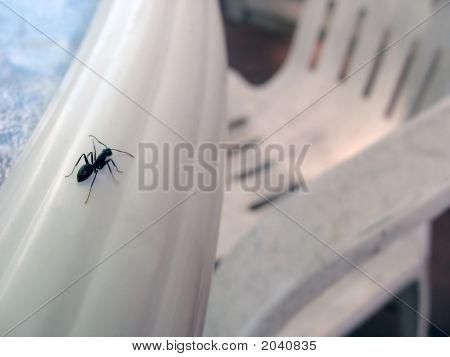 An Ants World