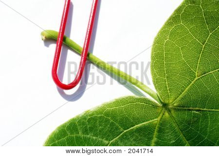 Leaf And Clip