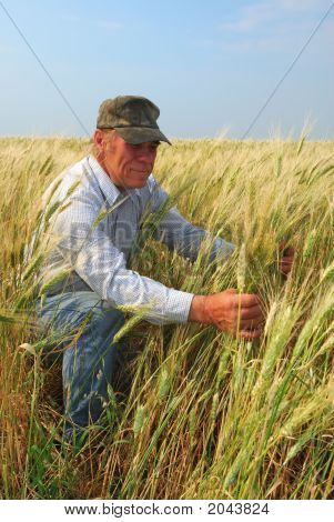 Farmer Inspecting Durum Wheat