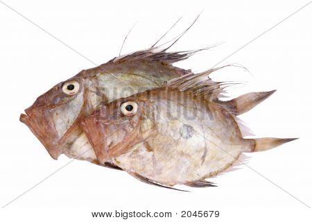 San Pierre Fish