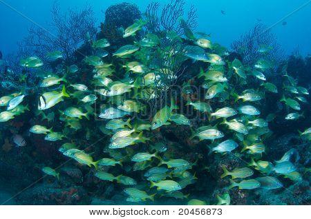 Aggrgation de pescado