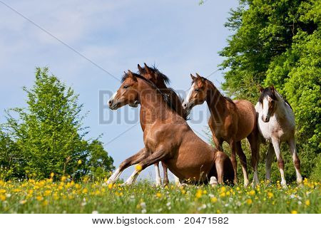 two young Stallions stand on a colorful meadow