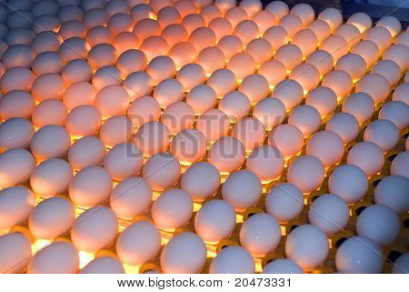 Egg Factory - Quality Control By Candling