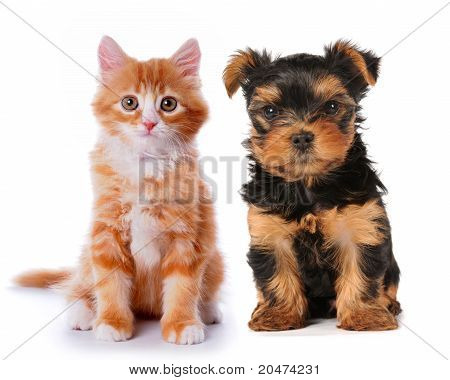 Little Cute Puppy And Red Kitten Isolated On White
