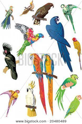Abbildung mit blauen, grünen und roten Papageien