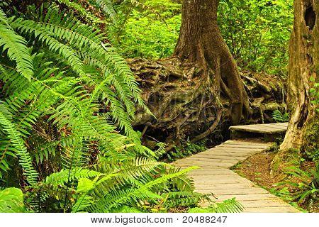 Pfad im Regenwald