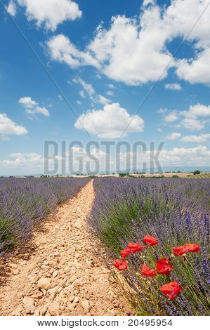 Lavender fields and red poppies in the French Provence at the Valensole plateau