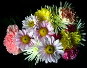 image of daisy flower  - bouquet of flowers - JPG