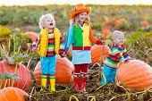 Kids Picking Pumpkins On Halloween Pumpkin Patch poster