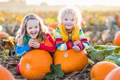 Kids Picking Pumpkins On Halloween Pumpkin Patch poster