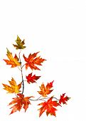 stock photo of fall trees  - Autumn background with red fall maple leaves - JPG