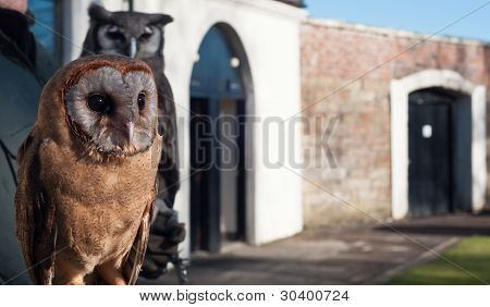 Photograph Of A Brown Owl In The Foreground And Grey Owl In The Background