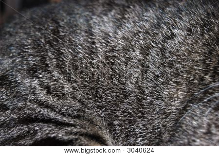 Tabby Cat Fur