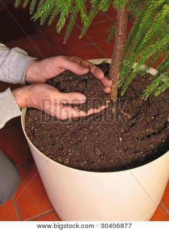Nurturing hands holding soil