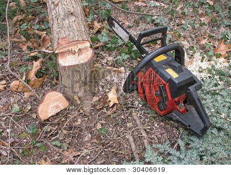 Chainsaw and cut tree