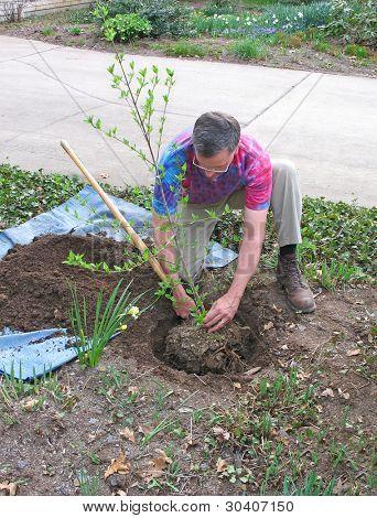 man Pflanzen Baum