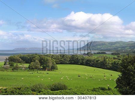 ruhige Schaf Weide mit Bucht und die Berge im Hintergrund, Bangor, Wales, Großbritannien