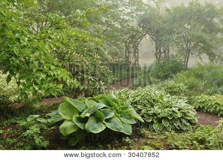 Shade garden with path leading to vine-covered trellis on a misty morning