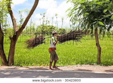 LOMBOK, INDONESIA - FEBRUARY 14 - Indonesian farmer carrying dry branches on February 14,2012 , Lombok. Today, like before, Indonesian farmers carrying thiks hanging on long stick