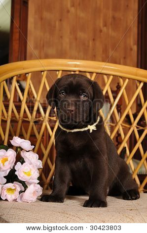 Lindo perrito se sienta en la silla